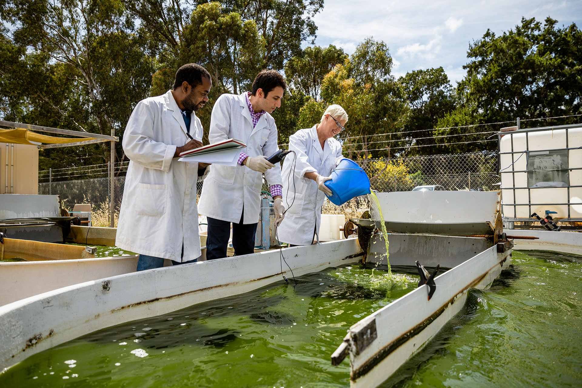 A shot of three scientists working on research outdoors, they are pouring water out of a bucket into a large container of water in Perth, Australia.